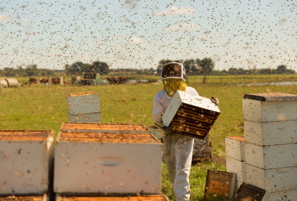 ENC partners with NBFF Pollinators