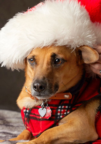 Stasha with Santa hat and neck scarf
