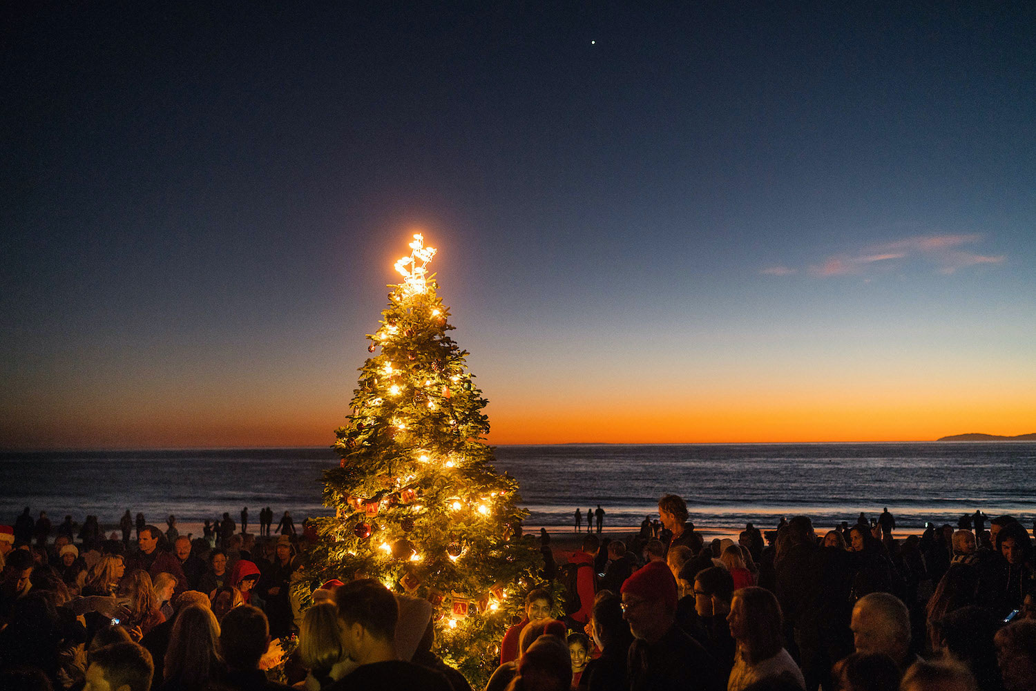 Crystal Cove tree lighting