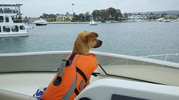 Stasha on boat