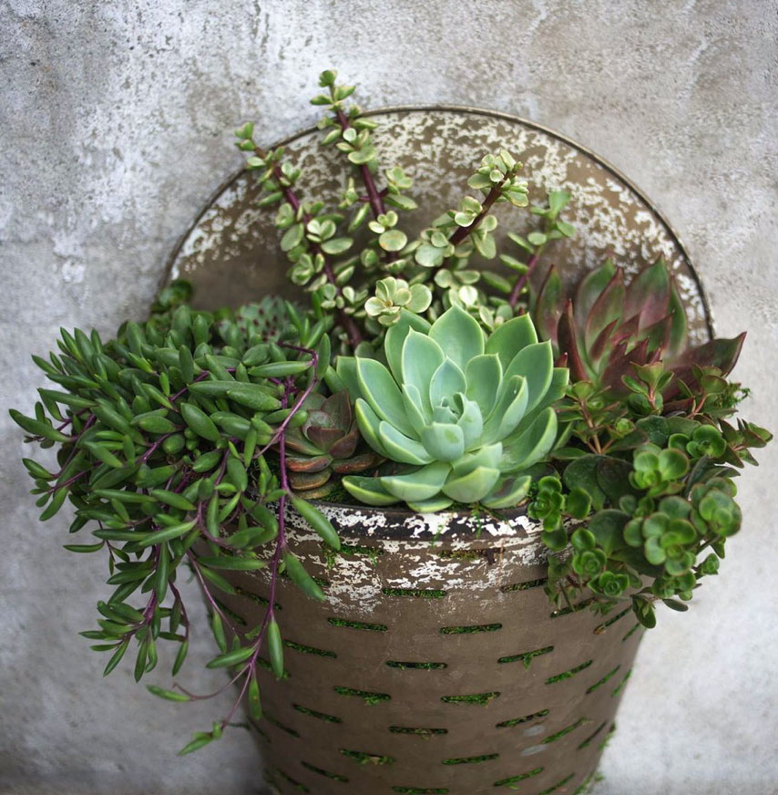 H&G Galvanized Succulent Wall