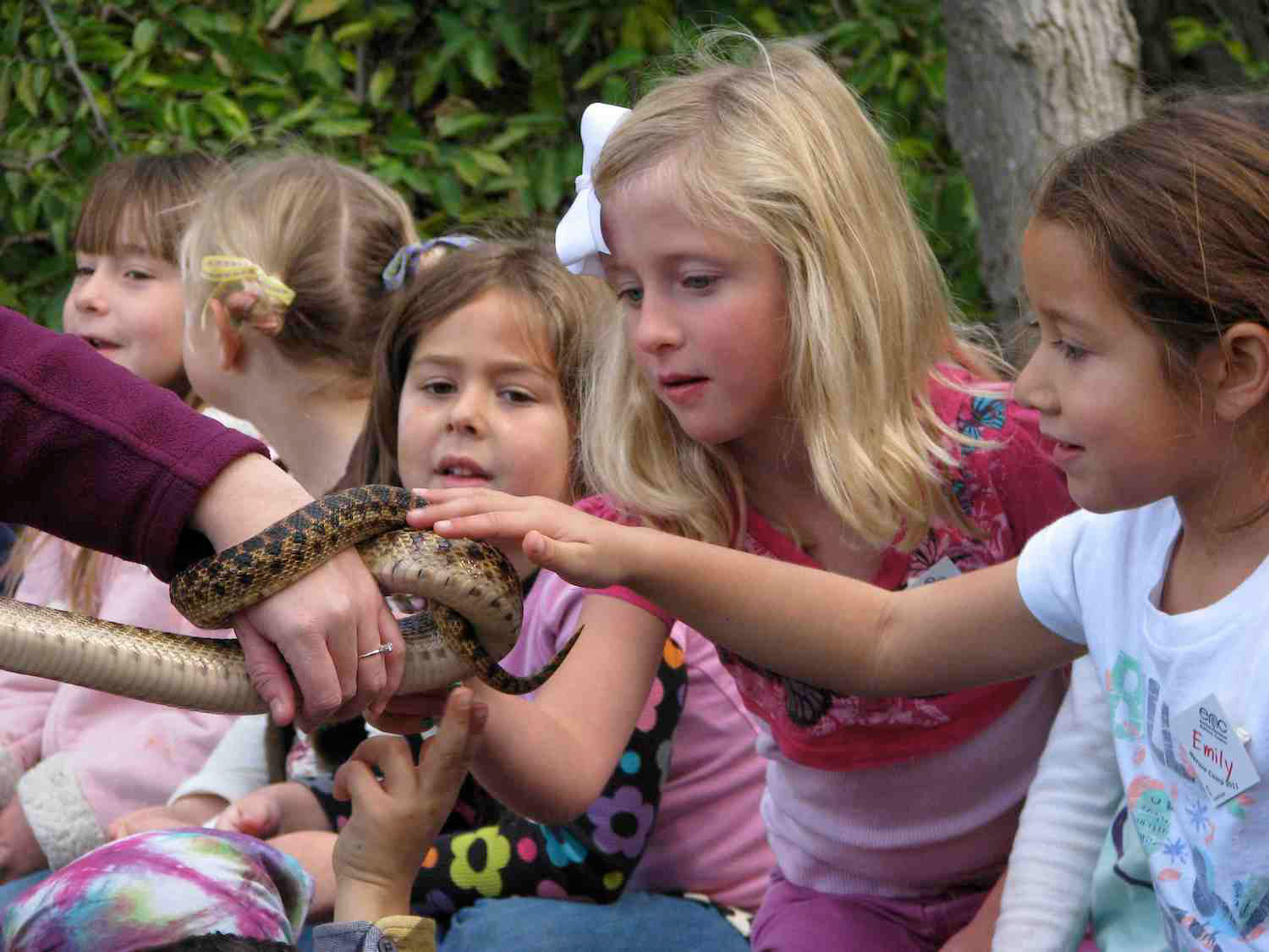 ENC to offer Nature Camp petting a snake