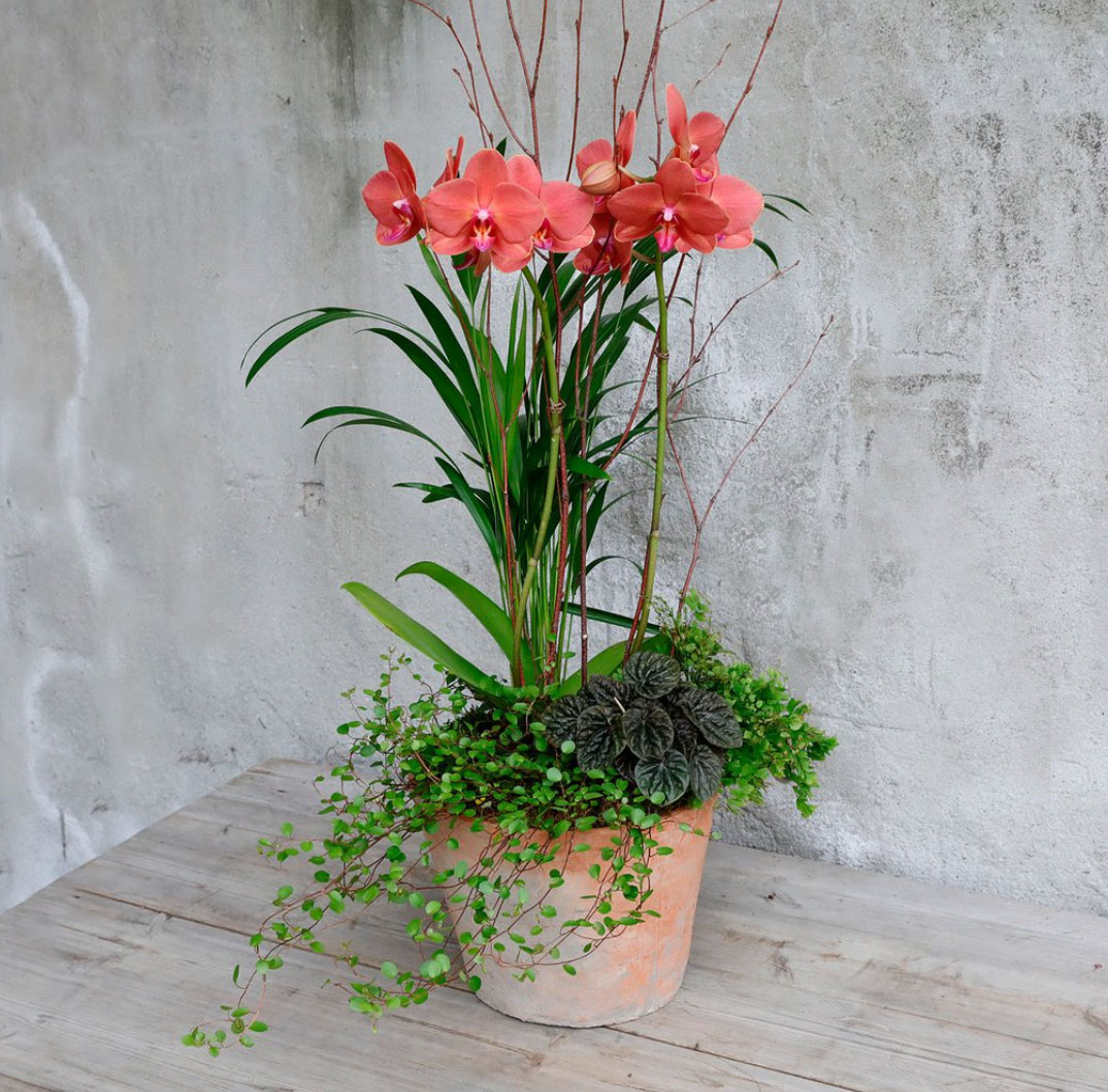 H&G Orchid Planter